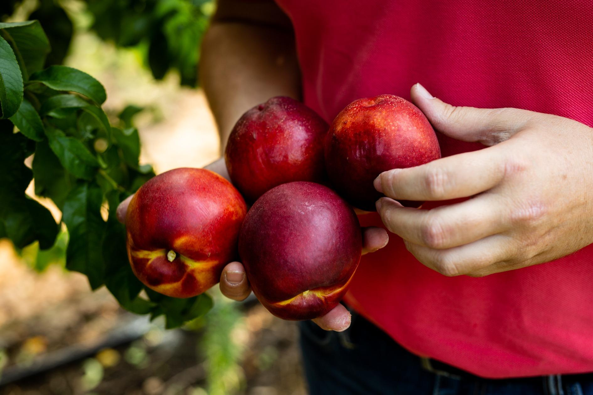 Frutales. Nutrición vegetal